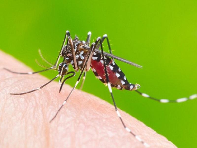 10 loại côn trùng nguy hiểm trong nhà