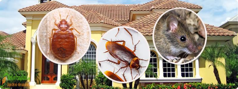 Top 5 công ty diệt côn trùng tại Hà Nội