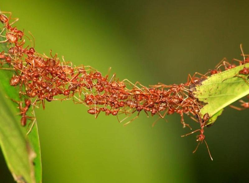 Cách diệt kiến trên cây
