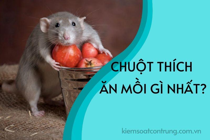 Chuột thích ăn mồi gì nhất