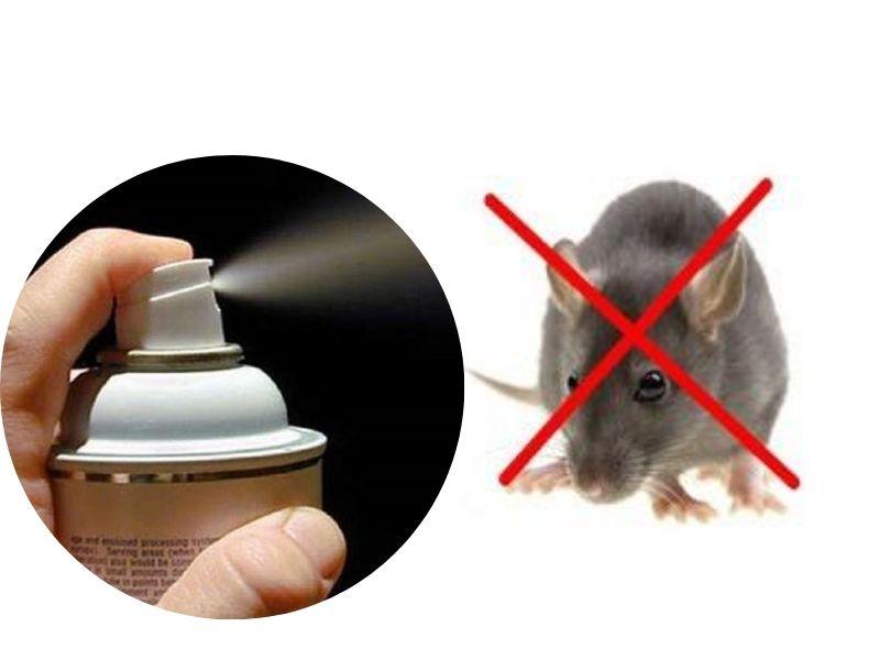Cách diệt chuột bằng thuốc xịt muỗi
