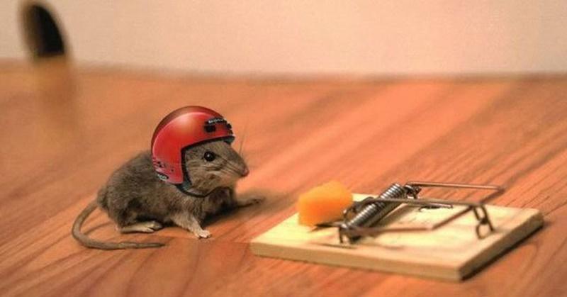 Cách làm bẫy chuột không cần mồi