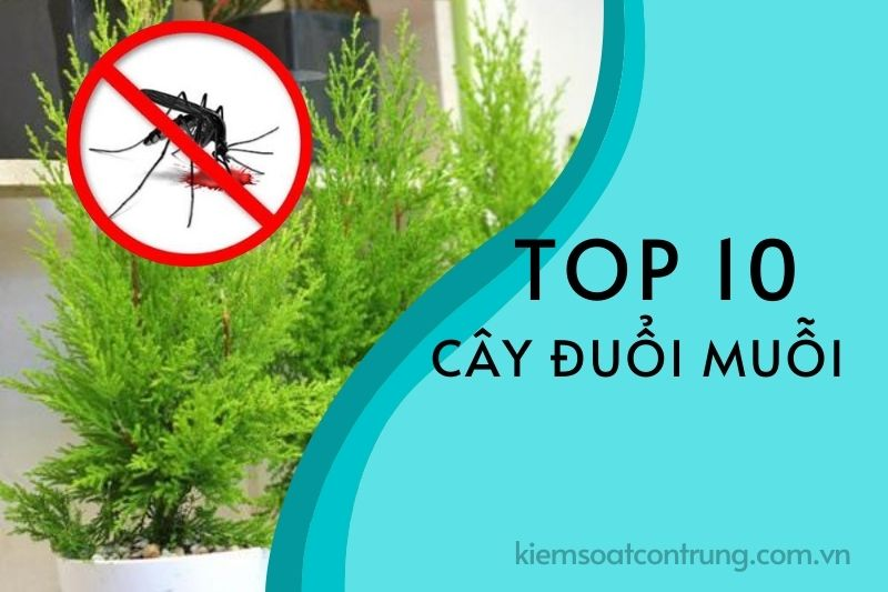 Cây đuổi muỗi