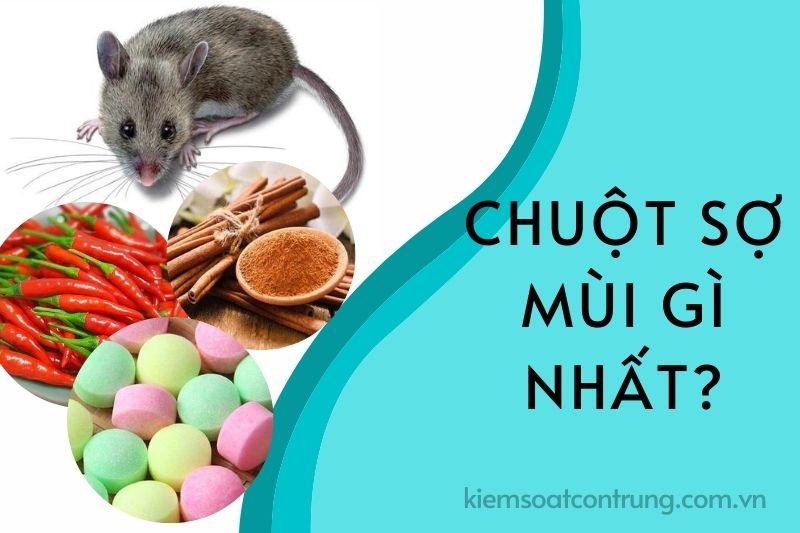 Chuột sợ mùi gì nhất