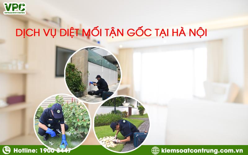 Dịch vụ diệt mối tại Hà Nội